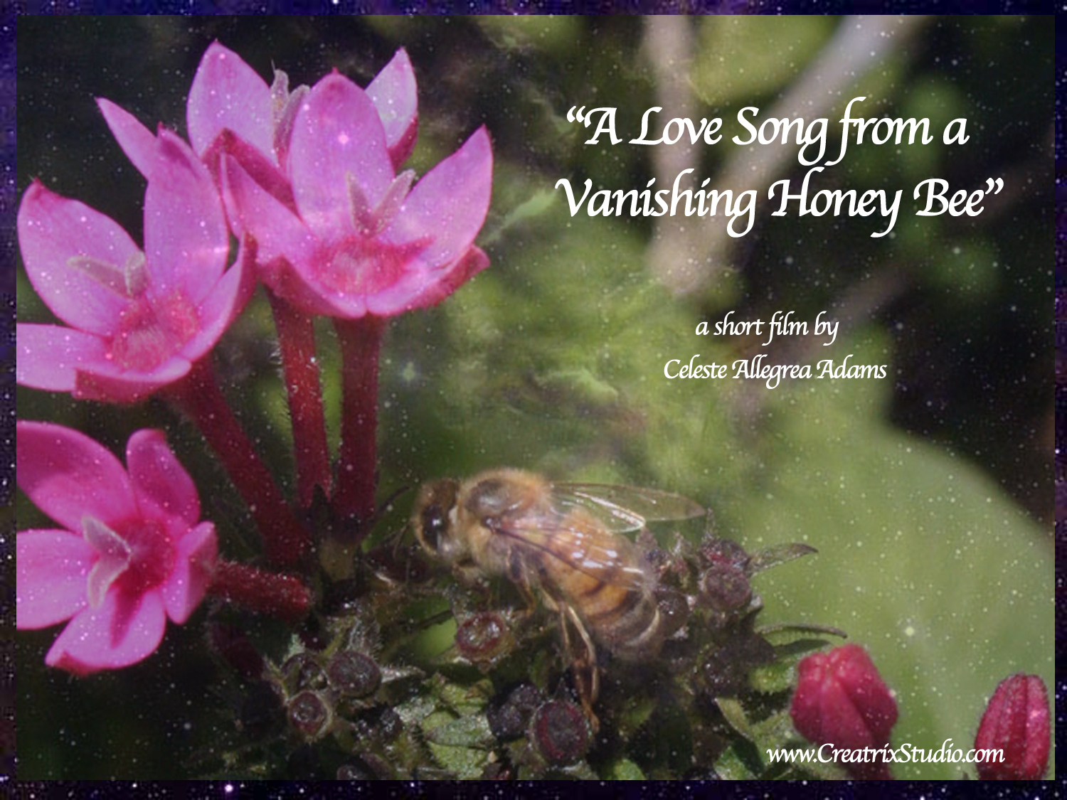 A Love Song from a Vanishing Honeybee